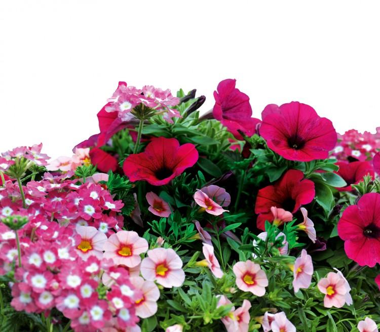 Букетов для, заказ рассады цветов