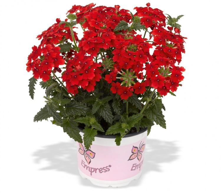 Все виды комнатных растений фото и названия майке тоже